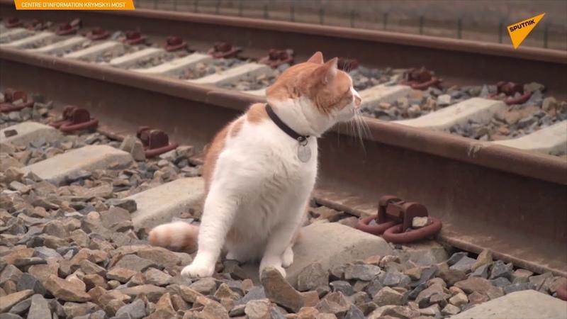 Le chat Mostik inspecte le pont de Crimée avant l'inauguration de sa partie ferroviaire