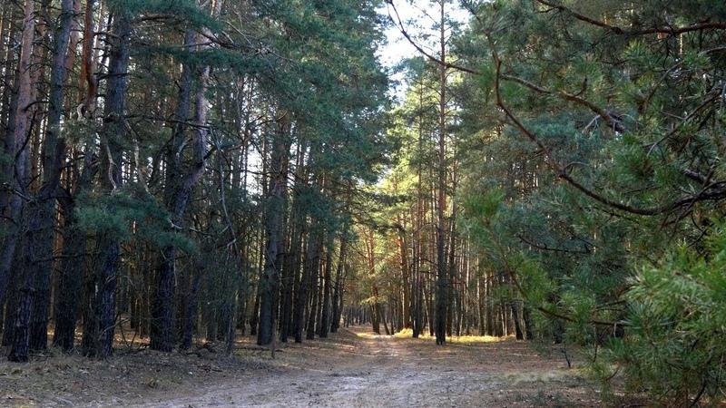 🍃 КРАСИВЫЙ Сосновый Лес Ранней Весной ~ ЛЕСНАЯ ПРИРОДА для релаксации и сна 🍂