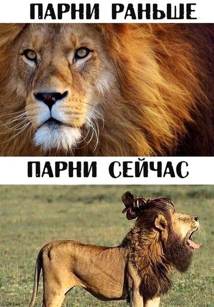 этом родственники картинки лев с надписью мужики тогда и сейчач поклонники смогли