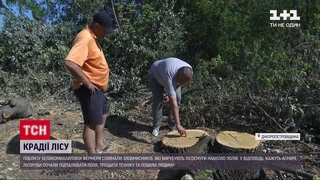 Битва за ліс: у Дніпропетровській області фермери повстали проти лісорубів