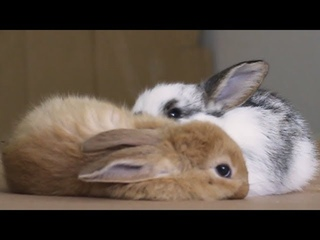 10 minutes of very important bunny footage