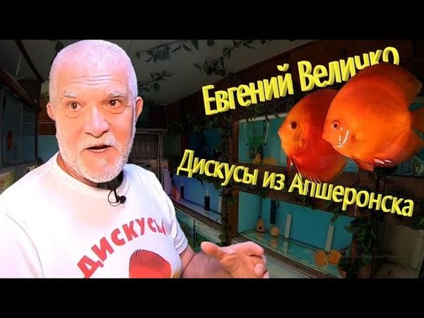 Дискусы из Апшеронска. Евгений Величко