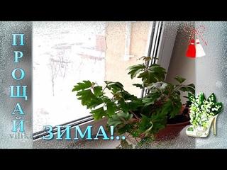 Прощай зима С первым днем весны Поздравляю с Весной друзья Красивая  музыкальная видео открытка