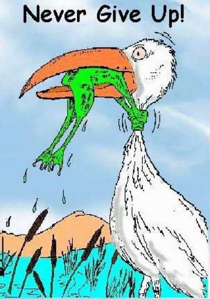 Картинка цапля глотает лягушку никогда не сдавайся могла