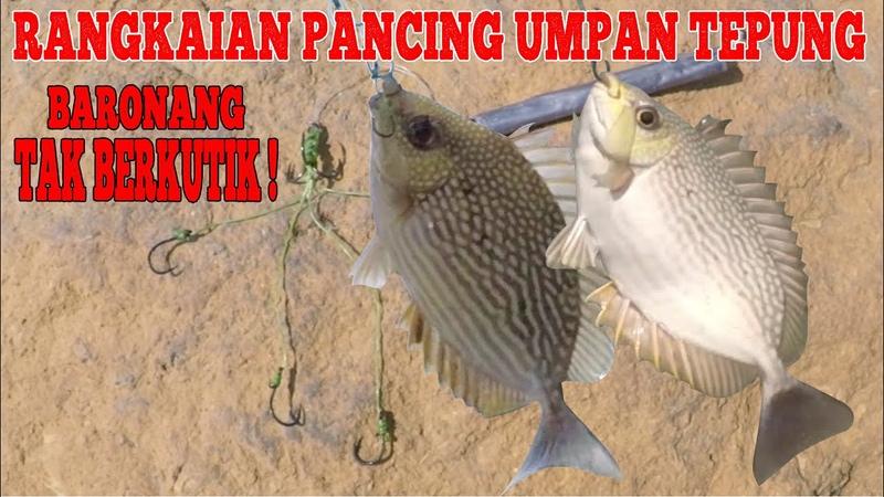 Rangkaian Pancing Baronang Umpan Tepung Killer Rabbitfish Fishing