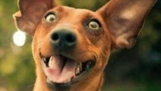 Собаки-терминаторы и гиперактивность: Иван Затевахин (стрим)