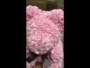 Обзор мишки из роз в Иркутске
