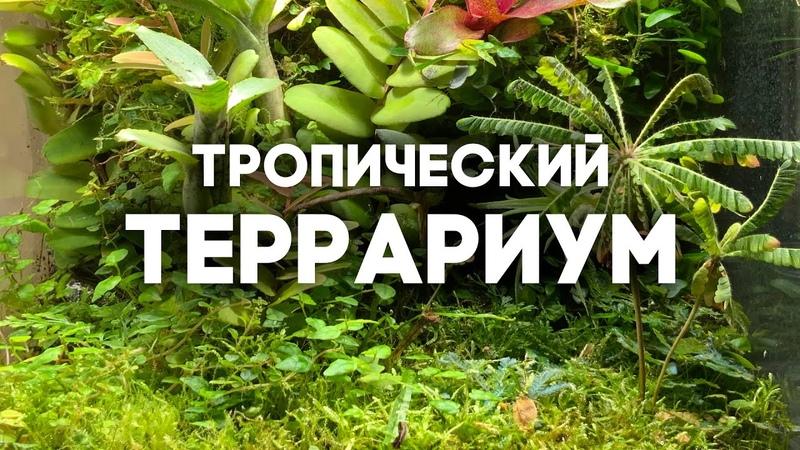 ЗАСЕЛЯЮ МУРАВЬЁВ В ТРОПИЧЕСКИЙ ТЕРРАРИУМ ОБЗОР МОЕЙ КОЛЛЕКЦИИ РАСТЕНИЙ 2020 Палюдариум с муравьями