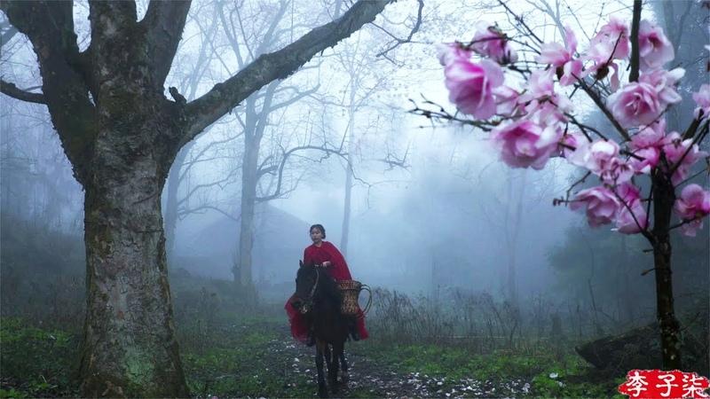 Riding a Horse to Find Magnolia Liliflora Blossoms for You 遛马寻花,摘下开得正盛的辛夷给喜欢的你们 Liziqi Channel