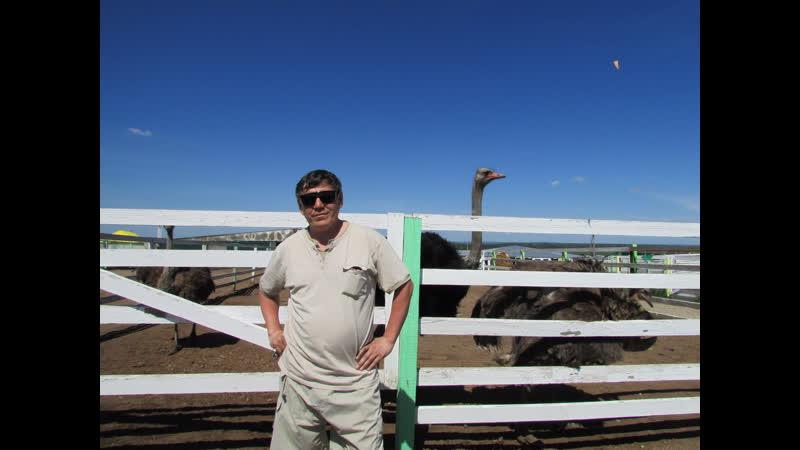 великолепный страус гафурийский