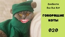 Говорящие коты. Смешные животные. Приколы с животными / Подборка 020