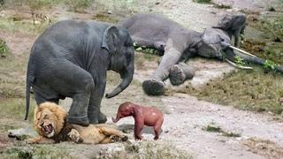 Животные защищают своих детенышей! НА что способна мама.
