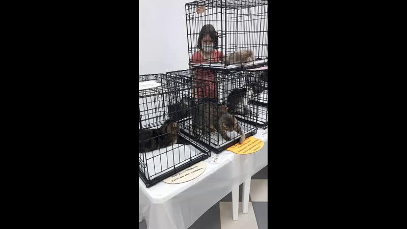 Live УСАТЫЕ ПОЛОСАТЫЕ помощь бездомным животным
