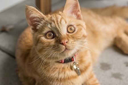 Как и чем кормить кота после кастрации
