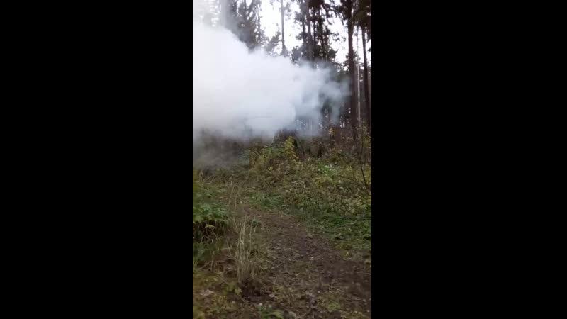 сепары в лесу