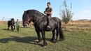 Pereche de negri Armasarii lui Lupu Sor de la Orlat Sibiu 2018 Nou