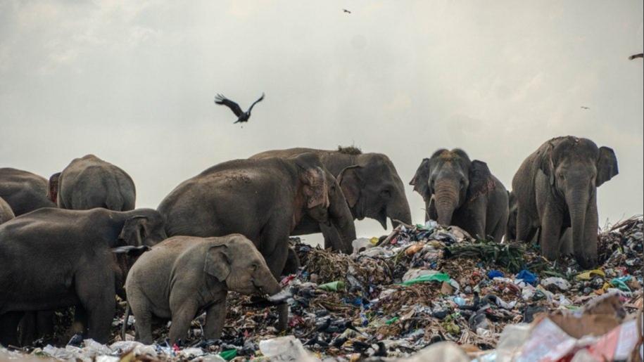Рядом с джунглями в парке Ампара пару лет назад появилась новая нелегальная свалка, которая привлекла