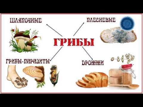 Грибы паразиты рассказывает миколог Михаил Вишневский