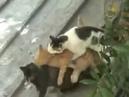 Приколы с кошками Групповые занятия Коты и кошки Прикол с котами Смотри!
