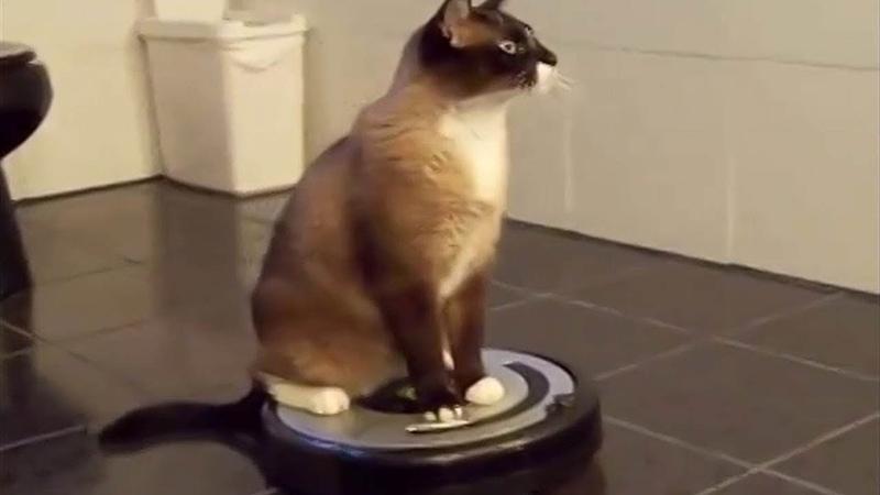 8 дней и робот-пылесос iLife v50 Pro на руках. Обзор умного помощника. Пылесос для кота.