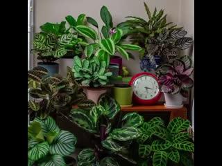 Ускоренное 24-часовое видео растений [NR]