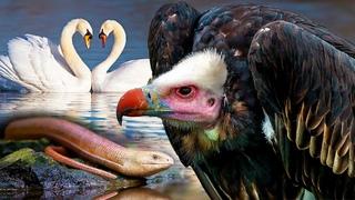 Великаны и карлики животного мира. Как они выживают в дикой природе? | Все как у людей