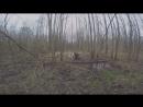 Охота на кабана с лайками