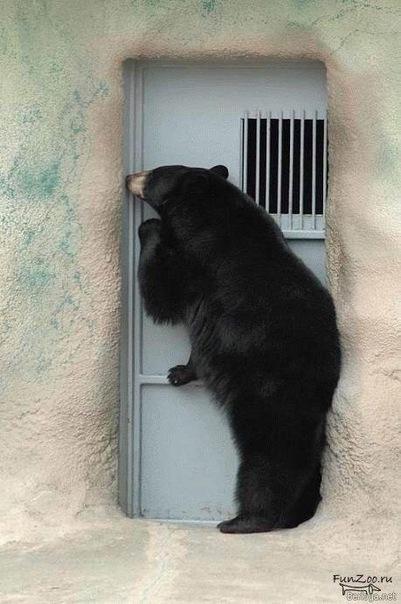 Гифка сова открывай медведь пришел