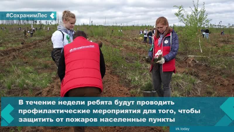 «Молодежка ОНФ» в Иркутской области запустила всероссийскую акцию по сохранению сибирского леса