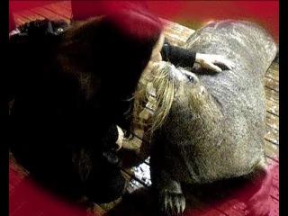 Староста (Наталья) + Морской Заяц (Дик) =...страстный поцелуй♥