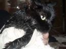 Моя любимая кошка Мася