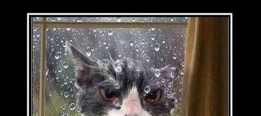 Демотиваторы дорогой ты кота впустил сорта комнатного