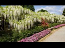 Японский парк цветов.