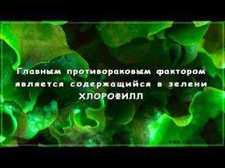 Жидкий Хлорофилл Liqiud Chlorophyll   жемчужина NSP