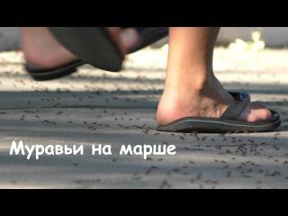Муравьи на марше - Саратов, Парк Победы (The ants on the march, Saratov)