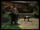 Дактари 15 я серия Джуди и гиена
