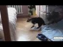 СМЕШНЫЕ КОШКИ. Подборка самых смешных видео про кошек и котов