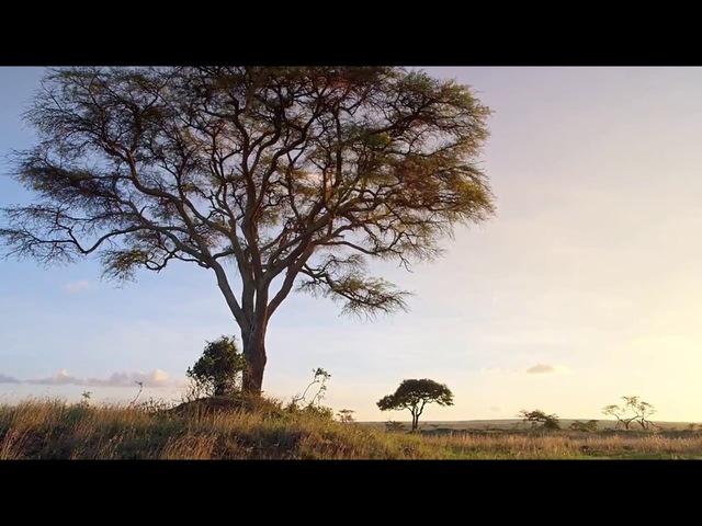 Микромонстры с Дэвидом Аттенборо: Колония (2013)