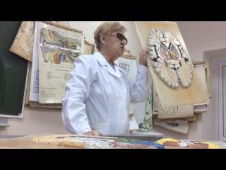 Центральная Нервная Система (4 часть)