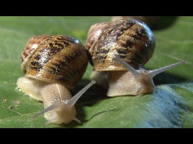 Chów ślimaków szansą rozwoju gospodarstw rolnych
