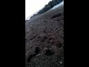 крым николаевка шторм 19 11 2015 собираем ракушки