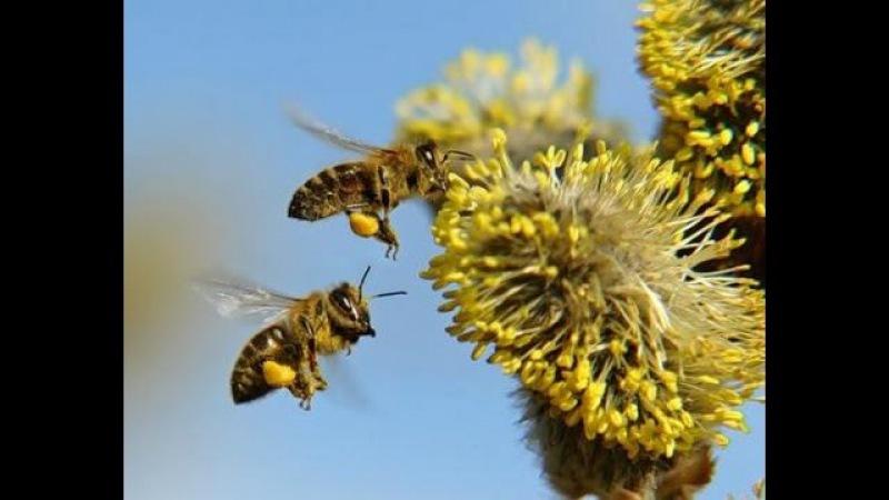 Энциклопедия пчеловодства Сны пчел Фильм №1 Сны весенние