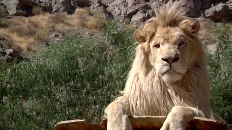 5 фактов о диких животных от EcoWorld