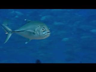 BBC. Жизнь. Фильм 4. Рыбы