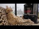 Кот балдеет у обогревателя Правильное использование обогревателя