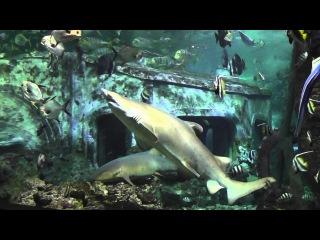 Воронежский океанариум - Кормление акул// Voronezh Aquarium - shark feeding