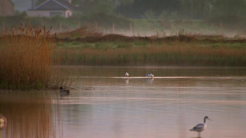 BBC Тайная жизнь птиц Созданные для жизни в Уэльсе 2010 BDRip 720p