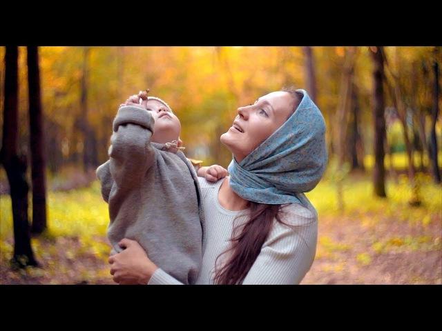 Осень красота шишки лес Бабье лето KinoMama КиноМама
