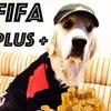 Fifa Plus