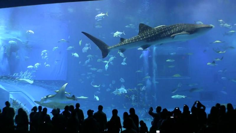 Okinawa_Churaumi_Aquarium_-_Ocean_Expo_Park